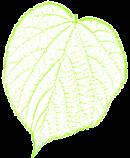 lindenblatt_logo